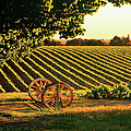 Cart Wheels At Barossa Valley Vineyard, South Australia by Peter Walton Photography