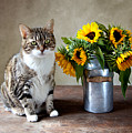 Cat And Sunflowers by Nailia Schwarz