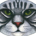 Cat Oval Face by Carol Wilson