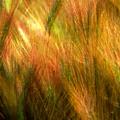 Cat Tails by Paul Wear