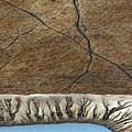 Cattle Tracks by Tim Nichols