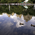 Central Park Pond With Two Ducks by Madeline Ellis