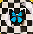 Checker Plate And Blue Butterfly by Garry Gay