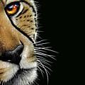 Cheetah by Jurek Zamoyski
