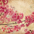 Cherry Blossoms by Rich Leighton