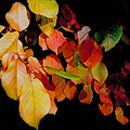 Chokecherry Leaves by Terril Heilman