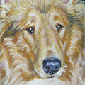 Collie Close Up by Lee Ann Shepard