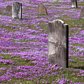 Colonial Tombstones Amidst Graveyard Phlox by John Stephens