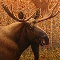 Colorado Moose by James W Johnson