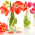 Colorful Spring Tulips In Old Milk Bottles by Sandra Cunningham