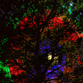 Colorful Tree by James BO  Insogna