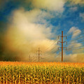 Corn Field At Sunrise by Photo by Jim Norris