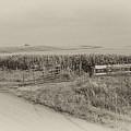 Corn Gate Rusty by Wilma  Birdwell