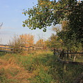 Country Lane by Jim Sauchyn