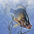 Crappie Cover Tangle by JQ Licensing