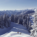 Cross-country Skiing In Aspen, Colorado by Annie Griffiths