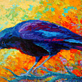 Crow IIi by Marion Rose