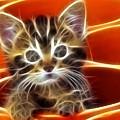 Curious Kitten by Pamela Johnson