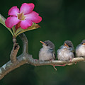 Cute Small Birds by Photowork by Sijanto