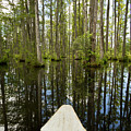 Cypress Garden Swamp by Dustin K Ryan