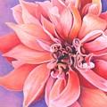 Dahlia 2 by Phyllis Howard