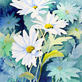 Daisies by Sam Sidders