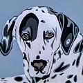 Dalmatian by Slade Roberts