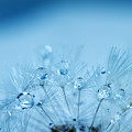 Dandelion Bouquet by Rebecca Cozart