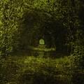 Dark Wood by Steve K