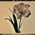 Daylily Of Old by Marsha Heiken