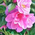 Deep Pink Camellias by Sharon Freeman