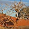 Desert Beauty by Joe  Burns