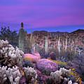 Desert Garden by Eric Foltz