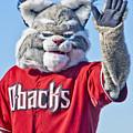 Diamondbacks Mascot Baxter by Jon Berghoff