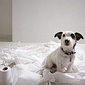 Dog Sitting On Bathroom Floor Amongst Shredded Lavatory Paper by Chris Amaral