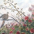 Dove And Roses by Ben Kiger