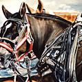 Draft Mules by Nadi Spencer