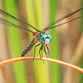 Dragonfly by Everet Regal