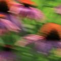 Dreaming Of Flowers by Karol Livote