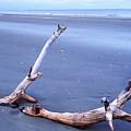 Driftwood Little St Simons Island by Thomas R Fletcher