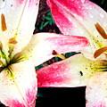 Dual Pinks II by Amanda Kiplinger