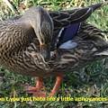Duck Annoyances by Rana Adamchick