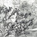 Dunbar Cave Clarksville Tn by Joy Neasley