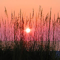 Dune Grass Sunset by Bill Cannon
