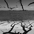 Dunk Island Australia 172 by Per Lidvall