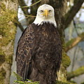 Eagle Eyes by Angie Vogel