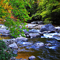Early Autumn Along Williams River by Thomas R Fletcher