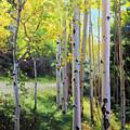 Early Autumn Aspen by Gary Kim