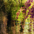 Echoes Of Monet - Cherry Blossoms Over A Pond - Brooklyn Botanic Garden by Vivienne Gucwa