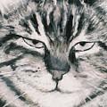 El Gato by Billie Colson